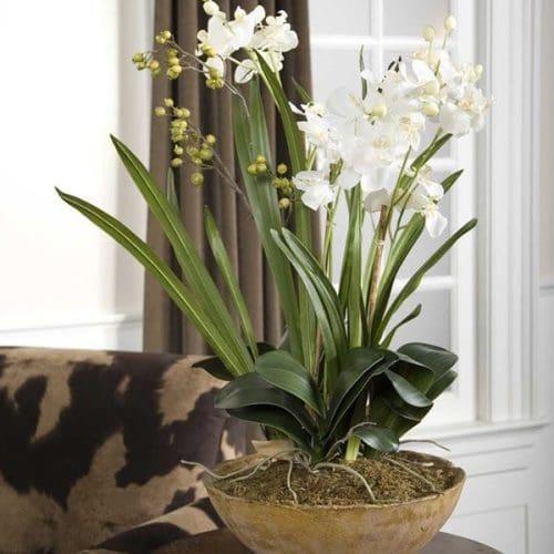 Moth Orchid Planter