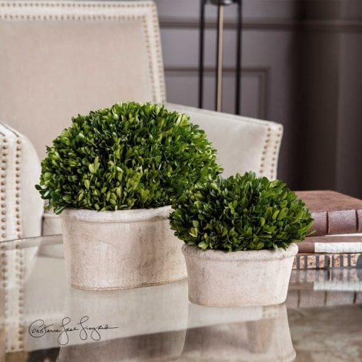 Preserved Boxwood Oval Domes